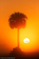Palm tree silhouetted at sunrise, Viera Wetlands or Rich Grissom Memorial Wetlands, Brevard County, Florida