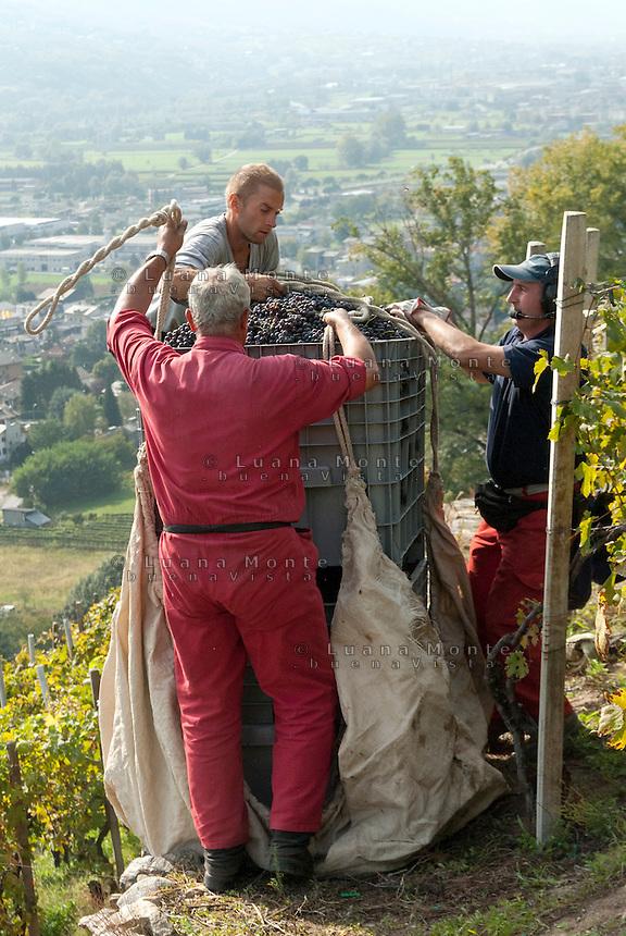 Vendemmia con elicottero nei vigneti della casa vinicola Nino Negri. Valtellina, 15 settembre, 2007<br /> <br /> Grape harvest by helicopter in the vineyards of Nino Negri wine company. Valtellina, September 15, 2007