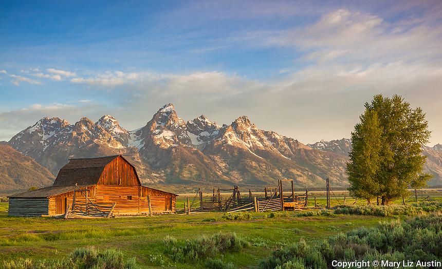 Grand Teton National Park, WY: Summer morning light on the John Moulton barn at Mormon Row - Antelope Flats