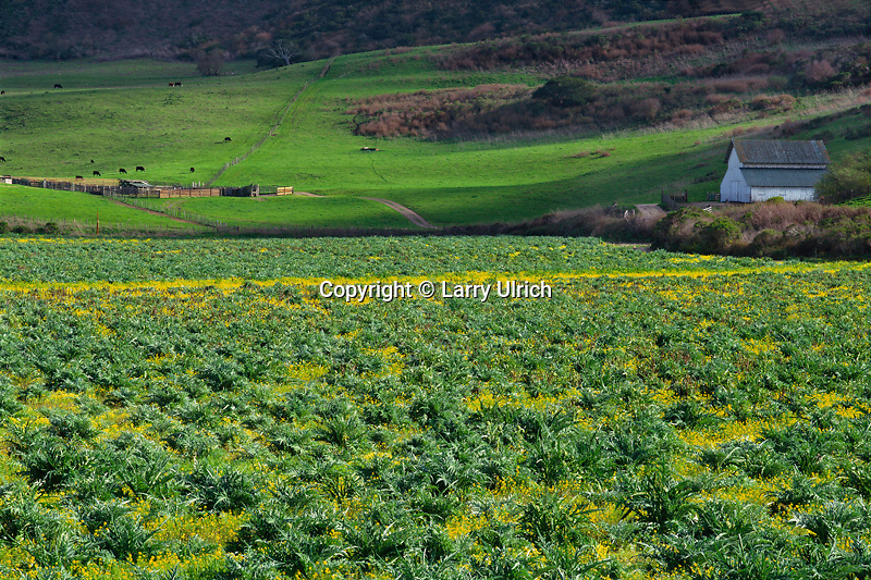 Artichoke fields and mustard from Highway 1<br />