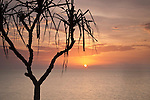 Pandanus palm with sun rising over Coral Sea.  Port Douglas, Queensland, Australia