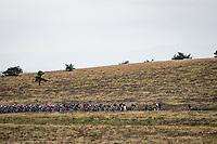 peloton up the Col du Béal<br /> <br /> Stage 1: Clermont-Ferrand to Saint-Christo-en-Jarez (218km)<br /> 72st Critérium du Dauphiné 2020 (2.UWT)<br /> <br /> ©kramon