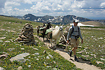 Guide hikes with pack llamas across the Flattop Mountain Trail the alpine tundra in Rocky Mtn. NP near the Continental Divide on a summer day in July, high in the Colorado Rocky Mountains