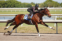 #20Fasig-Tipton Florida Sale,Under Tack Show. Palm Meadows Florida 03-23-2012 Arron Haggart/Eclipse Sportswire.