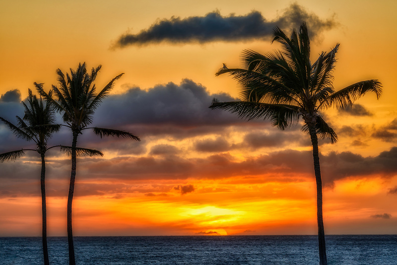Sunset with palm trees. Hawaii, The Big Island