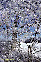 1I01-005b  Ice storm, winter, ice covered trees
