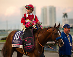 January 25, 2020: #10, Mucho Gusto and Jockey Irad Ortiz win the 2020 edition of the Pegasus World Cup for Trainer Bob Baffert and Assistant Trainer Jimmy Barnes at Gulfstream Park on January 25, 2020 in Hallandale Beach, FL. (Photo by Carson Dennis/Eclipse Sportswire/CSM)