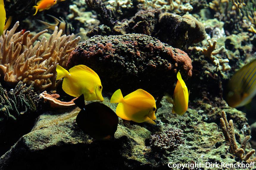 im Tropen-Aquarium (Troparium) im Tierpark Hagenbeck, Hamburg -Stellingen, Deutschland