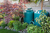 Rainwater cisterns connected to gutter in small space backyard garden; Jennifer Carlson garden
