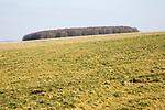 Chalk landscape scenery near Chitterne, Salisbury Plain, Wiltshire, England, UK