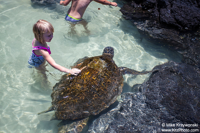 Little girl petting turtle in the water at Richardson Beach Park, Hilo, Big Island, Hawaii