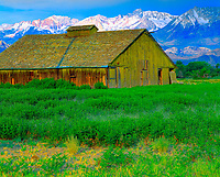 Old Barn & the Sierra Nevada, Owens Valley, California