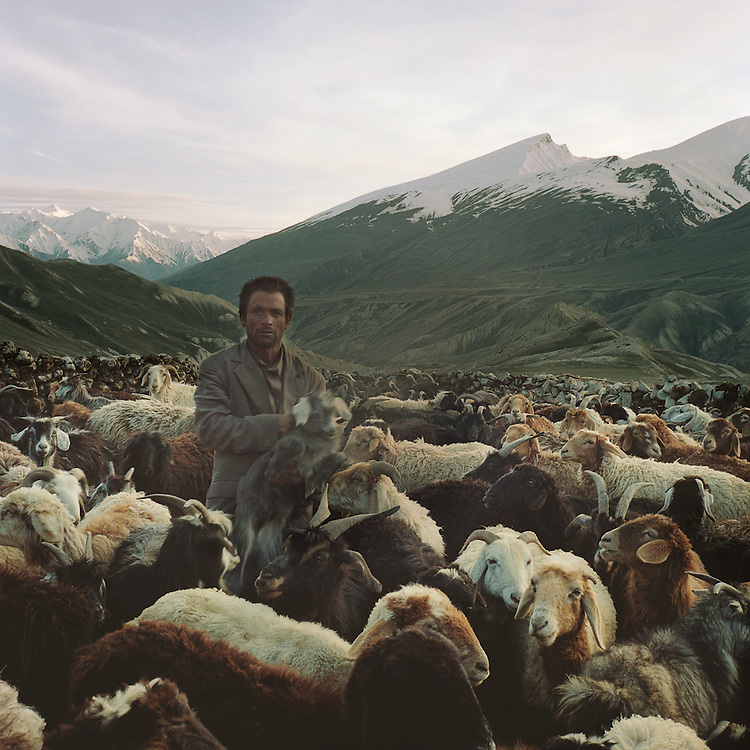 A Wakhi shepherd separates baby goats and sheep from their mothers in the Big Pamir Mountains.