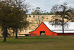 Red barn rolling hills, oaks, fence and pasture, eastern Texas.