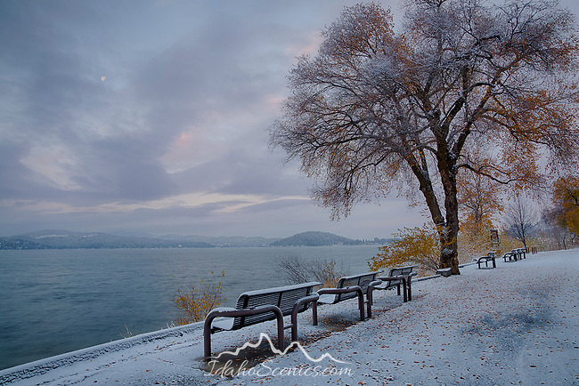 Idaho, North, Kootenai County, Coeur d'Alene.an early snowfall decorates the autumn trees along Lake shore Drive and the Centennial trail.
