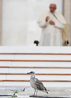 Un pulcino di gabbiano durante l'incontro di Papa Francesco, sullo sfondo, con gli appartenenti al Rinnovamento nello Spirito Santo in Piazza San Pietro, Citta' del Vaticano, 3 luglio 2015.<br /> A gull chick walks as Pope Francis, background, meets members of the Catholic Charismatic Renewal in St. Peter's Square at the Vatican, 3 July 2015.<br /> UPDATE IMAGES PRESS/Isabella Bonotto<br /> <br /> STRICTLY ONLY FOR EDITORIAL USE