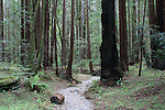 Armstrong Redwoods State Reserve