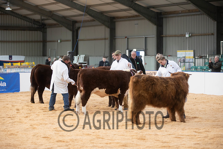 East of England Winter Stock Festival<br />  ©Tim Scrivener Photographer 07850 303986<br />      ....Covering Agriculture In The UK....