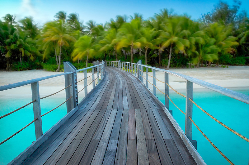 Boardwalk into palm trees blowing in the wind.  French Polynesia