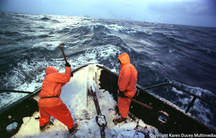 "Heaving sledgehammers, two crew members begin a frigid January morning in 1995 by smashing a coat of frozen sea spray from the bow of the Polar Lady during opilio crab season in the Bering Sea. An iced-over boat can become dangerously top-heavy in rough seas and roll over. After four or so hours of sleep deckhands rise, beat ice off the boat with baseball bats and sledgehammers, and begin fishing. Crab fishing in the Bering Sea is considered to be one of the most dangerous jobs in the world. This fishery is managed by the Alaska Department of Fish and Game and is a sustainable fishery. The Discovery Channel produced a TV series called ""The Deadliest Catch"" which popularized this fishery. Today this fishery, largely based out of Dutch Harbor, AK has been consolidated resulting in a lot less boats fishing."