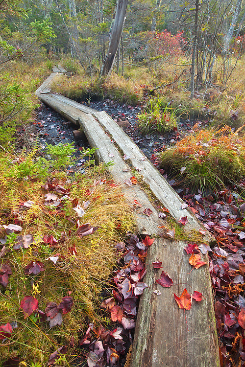 A wooden boardwalk crosses through a marsh area on the Median Ridge Trail on Isle au Haut in Acadia National Park, Maine, USA