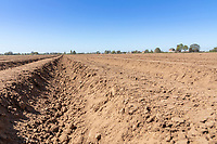 Freshly planted potato ridges - Lincolnshire, April
