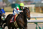 TOYOAKE,JAPAN-MAR 15: Saturnalia #6,ridden by Christophe Lemaire,wins the Kinko Sho at Chukyo Racecourse on March 15,2020 in Toyoake,Aichi,Japan. Kaz Ishida/Eclipse Sportswire/CSM