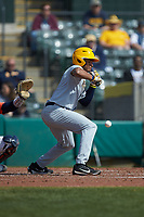 Victor Scott (6) of the West Virginia Mountaineers lays down a bunt against the Illinois Fighting Illini at TicketReturn.com Field at Pelicans Ballpark on February 23, 2020 in Myrtle Beach, South Carolina. The Fighting Illini defeated the Mountaineers 2-1.  (Brian Westerholt/Four Seam Images)