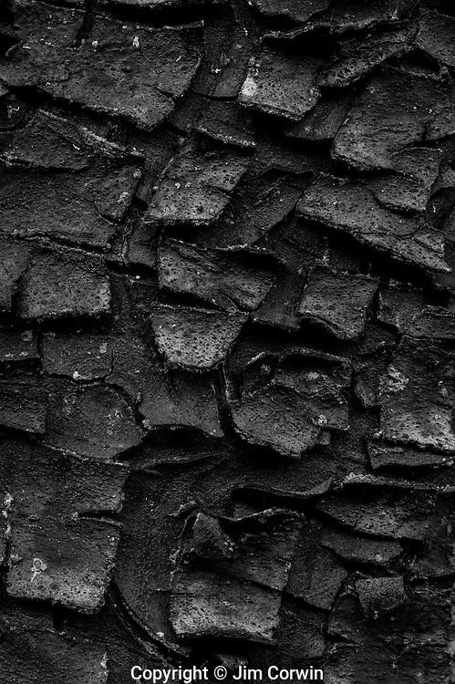 Close-up cypress tree bark
