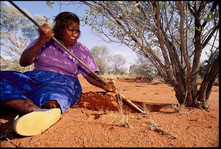 Kitty Miller digs around the roots of a witchetty bush for witchetty grubs, a traditional meal of Australia's aboriginal peoples (all but forgotten in the face of modern supermarket foodstuffs) outside Alice Springs in Central Australia. (Witchetty grubs are the larvae of cossid moths). (page 18)