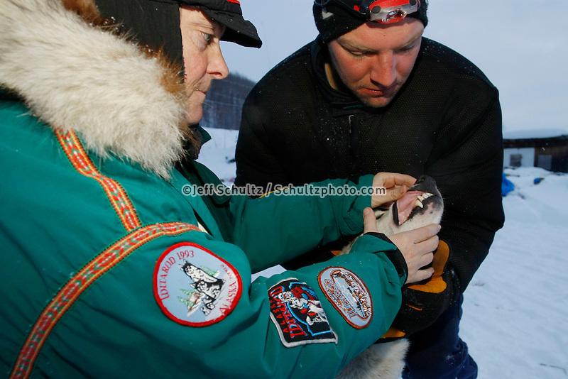 Veterinarian Jean Dieden examines one of Sven Haltman 's dogs at Takotna on Thursday morning    Iditarod 2009
