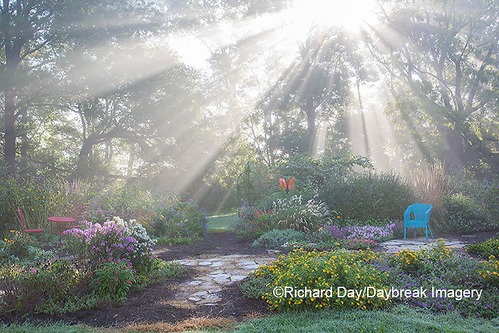 63821-23801 Sun rays in fog in flower garden, Marion Co., IL
