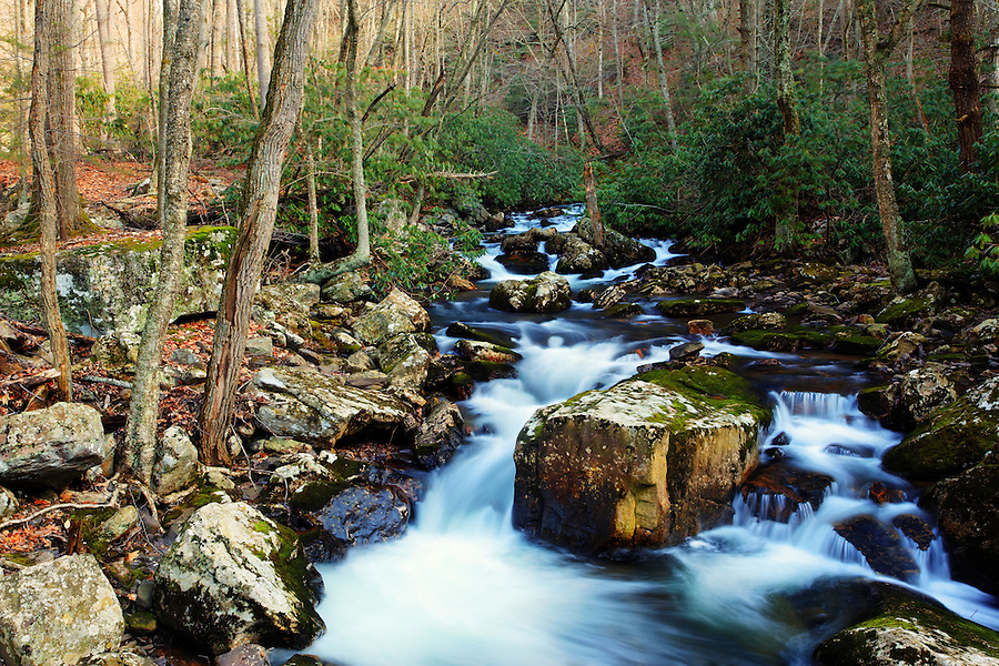 Little Stony Creek running through oak forest and over mossy boulders, Pembroke, Giles County, Virginia, USA.