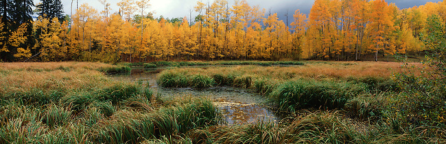 Aspen trees and willows line the edge of a wetland in Uncompahgre National Forest, near Telluride, Colorado.