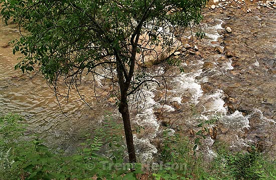 Tree and river<br />