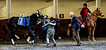 JAN 01, 2020 : Independence Hall acts up in the paddok, the Jerome Stakes, for three year olds, at Aqueduct Racetrack, in Ozone Park, NY, January 01, 2020. Sue Kawczynski_ESW_CSM