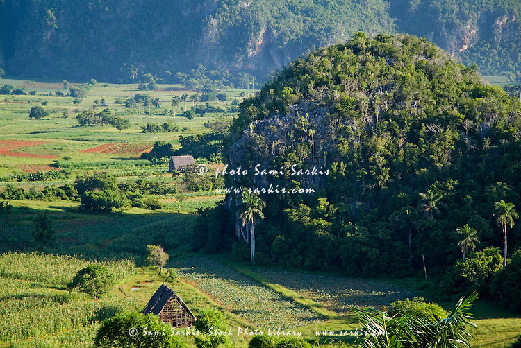 Cuban countryside showing lush vegetation amongst the Mogotes in the Vinales Valley, Cuba.