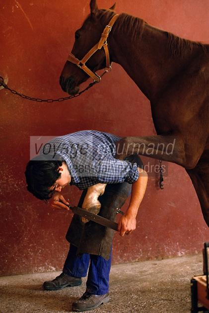 Europe/France/Pays de la Loire/49/Maine-et-Loire/Saumur: Ecole Nationale d'Equitation - Le maréchal-ferrand pose des fers à un cheval