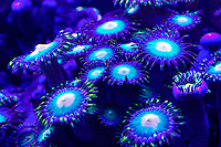 Fluorescent Corals