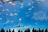 Manta rays, whale sharks, yellow-fin tunas, and bonito swim in schools in the Kuroshio Sea display at the Okinawa Churaumi Aquarium at Ocean Expo Park.