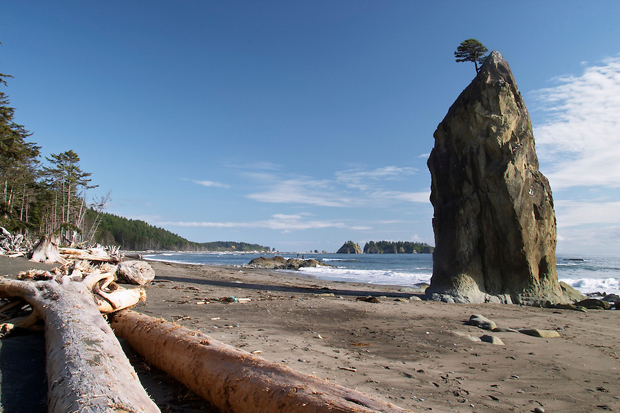 Driftwood on Mora Beach, Olympic National Park, Olympic Peninsula, Clallam County, Washington, USA