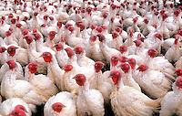 Turkey farm, Tennessee
