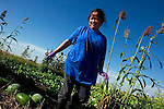 A Hmong immigrant woman whose family raises food on some of the 2.5 acres that the Griffieons rent to area Hmong families, Griffieon Family Farm, Ankeny, Iowa.