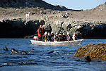 Skiff with adults at San Benitos Island.  Fur seals.