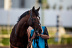 HALLANDALE BEACH, FL - JANUARY 27: Toast of New York before the Pegasus World Cup Invitational at Gulfstream Park Race Track on January 27, 2018 in Hallandale Beach, Florida. (Photo by Alex Evers/Eclipse Sportswire/Getty Images)
