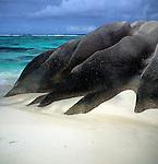 Granite rocks, Point Source d'Argent beach, La Digue, Seychelles