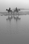 Horses on the beach in Crescent City