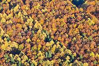 Sachsenwald: EUROPA, DEUTSCHLAND, SCHLESWIG- HOLSTEIN, REINBEK, (GERMANY), 30.10.2009: Sachsenwald aus der Luft, Herbstwald, Holz, Nutzwald, Waldsterben, Forst,  Laubwald, Faerbung, Indian Summer,  abgeschieden, abgeschiedenheit, Autumn,  einsam, Einsamkeit, Fall,  Herbst, Landscape, Landschaft, Natur, Nature, Nebel,   Reise, Reisen, Stimmung, Travel, Umwelt, Wald, Luftbild, Luftansicht, Aufwind-Luftbilder.. c o p y r i g h t : A U F W I N D - L U F T B I L D E R . de.G e r t r u d - B a e u m e r - S t i e g 1 0 2, 2 1 0 3 5 H a m b u r g , G e r m a n y P h o n e + 4 9 (0) 1 7 1 - 6 8 6 6 0 6 9 E m a i l H w e i 1 @ a o l . c o m w w w . a u f w i n d - l u f t b i l d e r . d e.K o n t o : P o s t b a n k H a m b u r g .B l z : 2 0 0 1 0 0 2 0  K o n t o : 5 8 3 6 5 7 2 0 9.V e r o e f f e n t l i c h u n g n u r m i t H o n o r a r n a c h M F M, N a m e n s n e n n u n g u n d B e l e g e x e m p l a r !.