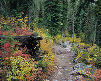 Fall colors along Jenny Lake Trail, Jenny Lake, Grand Teton NP,Wyoming, USA
