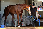 LOUISVILLE, KY -MAY 10: Kentucky Derby winner Justify led by assistant trainer Jimmy Barnes after galloping at Churchill Downs, Louisville, Kentucky. It was his first visit to the track since his Kentucky Derby win five days earlier. (Photo by Mary M. Meek/Eclipse Sportswire/Getty Images)